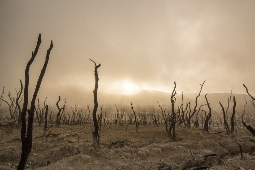 dead-trees-947331_960_720